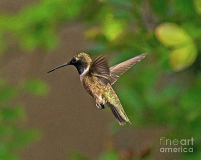 Photograph - In Flight by Steve Whalen