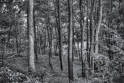 Photograph - In The Woods Moraine Hills State Park Bw by Roger Passman