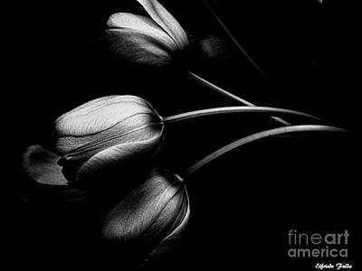 Photograph - Incognito by Elfriede Fulda