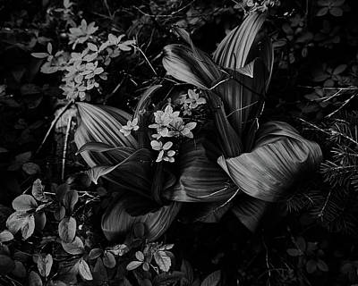Photograph - Indian Hellebore 3 by Trever Miller