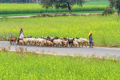 Photograph - Indian Villagers Herding Sheep. by Nila Newsom