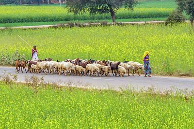 Photograph - Indian Villagers Herding Sheep. by Nila Newsom