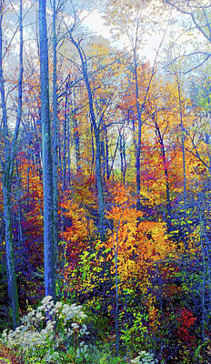 Indiana Autumn Woods Image Art Print by Paul Price