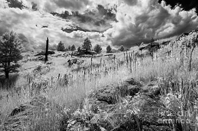 Just Desserts - Infrared Black Hills #8 by Bill Piacesi