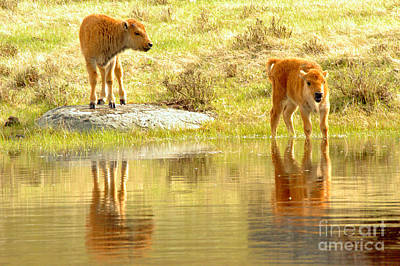 Photograph - Innocence On The Water by Adam Jewell