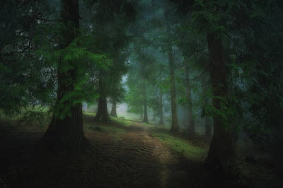 Photograph - Into The Forest by Mikel Martinez de Osaba