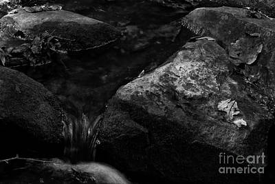 Photograph - Into The Stream 13 by Jimmy Ostgard