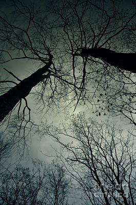 Photograph - Into The Woods by Debra Fedchin