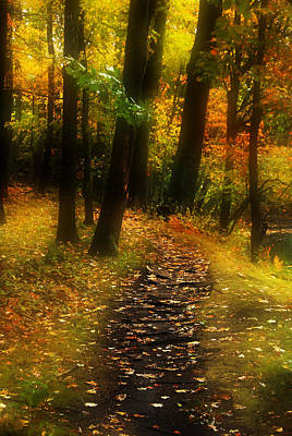 New England Fall Shots Photograph - Into The Woods by William Carroll