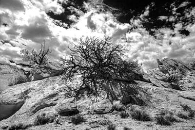 90270 Escalante Tree On Rock Art Print