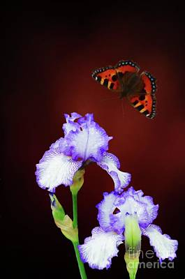 Digital Art - Iris And Butterfly by Suzanne Handel