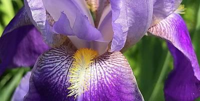 Photograph - Iris Macro 1 by Bruce Bley