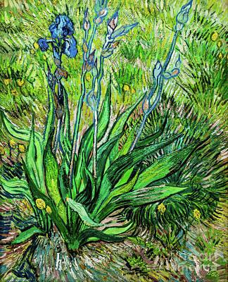 Painting - Iris by Vincent Van Gogh