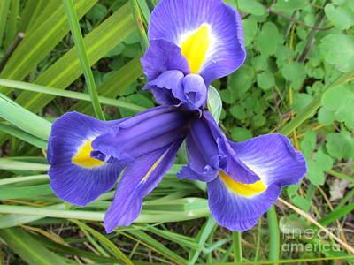 Irise Flower Art Print