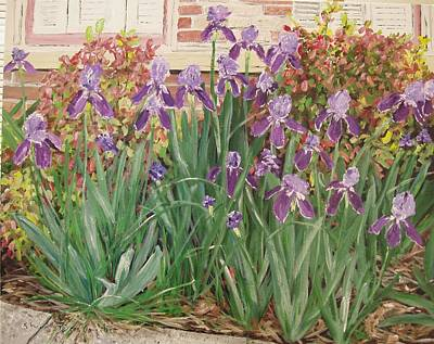 Irises Fort Smith Art Center Art Print by Sharon  De Vore