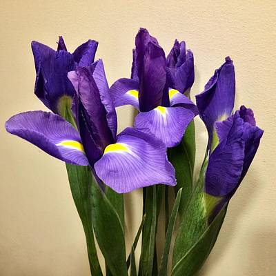 Photograph - Irises by Patricia E Sundik