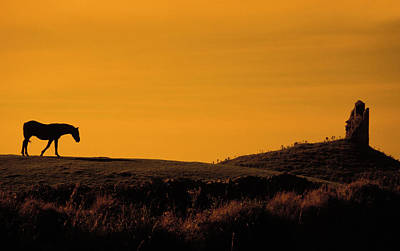 Photograph - Irish Horse In Sunset by Carl Purcell