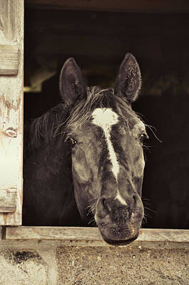 Photograph - Is That Treat For Me? by JAMART Photography