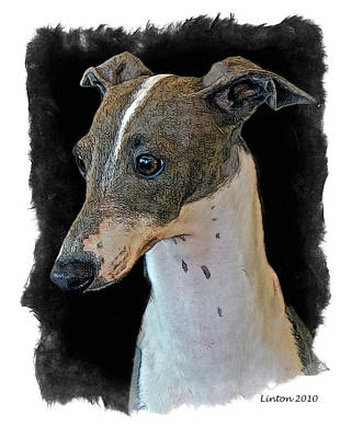 Italian Greyhound Art Print by Larry Linton