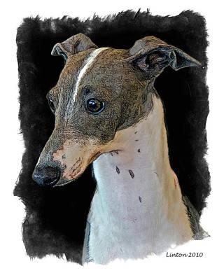 Akc Digital Art - Italian Greyhound by Larry Linton
