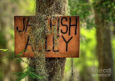 Photograph - Jackfish Alley by David Cutts