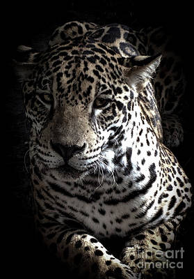 Photograph - Jaguar by Camille Pascoe