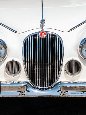 Photograph - Jaguar by Stewart Helberg