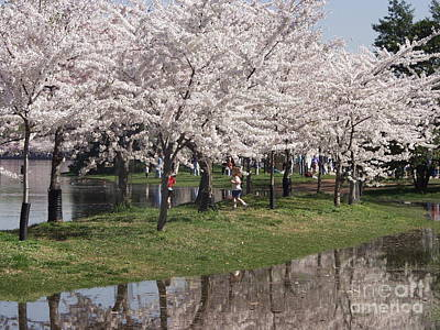 Photograph - Japanese Cherry Blossom Trees by April Sims