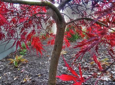 Photograph - Japanese Maple by David Bearden