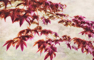 Photograph - Japanese Maple - Nature Art by Ann Powell