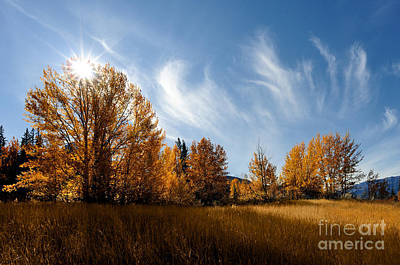 Photograph - Jasper - Autumn Sky Chief 2 by Terry Elniski