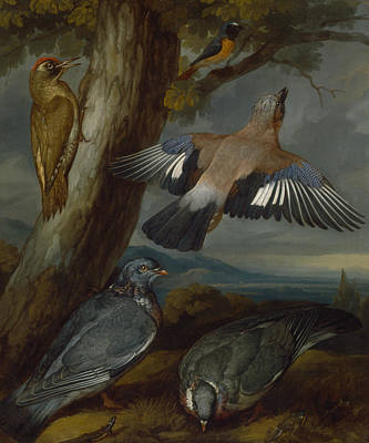 Painting - Jay, Green Woodpecker, Pigeons, And Redstart by Francis Barlow