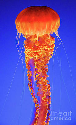 Photograph - Jellyfish by Bruce Block