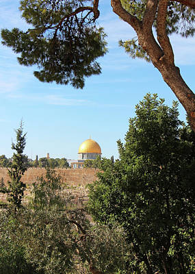 Photograph - Jerusalem Trees by Munir Alawi
