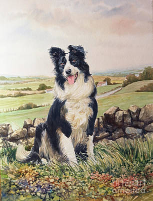 Jesse The Border Collie Original