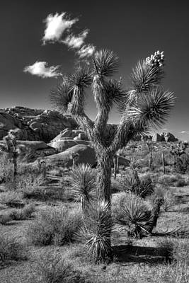 Desert Plants Photograph - Joshua Tree And Cloud by Peter Tellone