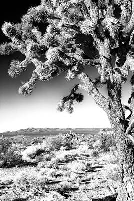 Joshua Tree At Mojave National Preserve In Black And White Art Print
