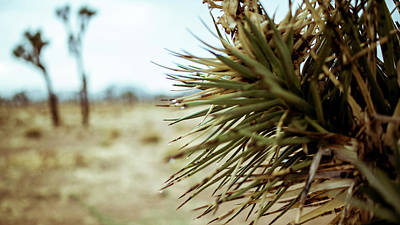 Photograph - Joshua Tree by Smoked Cactus