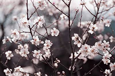Flower Photograph - Joy Of Spring by Jenny Rainbow