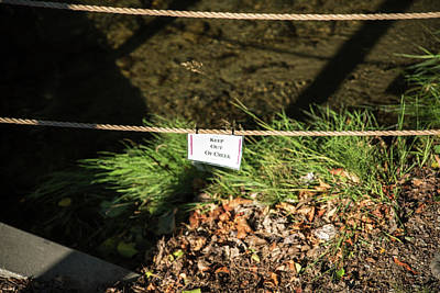 Photograph - Keep Out Of Creek by Tom Cochran