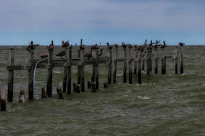 Photograph - Kemah Pelicans by Thomas Hall