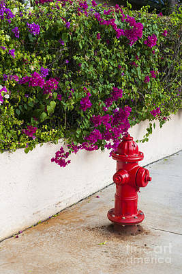 Fire Hydrants Photograph - Key West Fire Hydrant by Elena Elisseeva