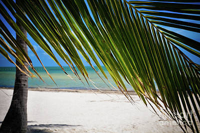 Art Print featuring the photograph Key West Palm by Kelly Wade