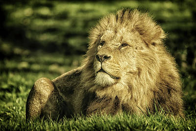 Photograph - King by Chris Boulton