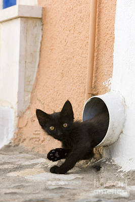 Coming Out Photograph - Kitten In A Pipe by Jean-Louis Klein & Marie-Luce Hubert