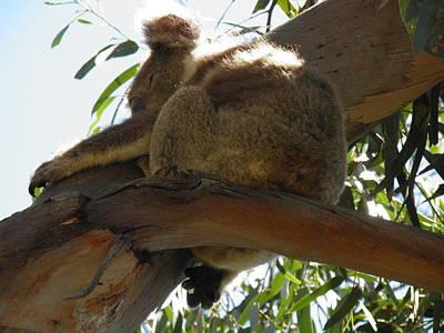 Koala Photograph - Koala by Viktor Milenkov