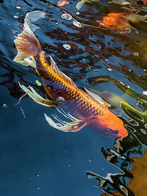 Photograph - Koi by Mark Mille
