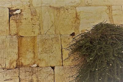 Photograph - Kotel Sunshine Day by Julie Alison