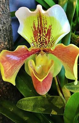 Photograph - Lady Slipper Orchid by Bruce Bley