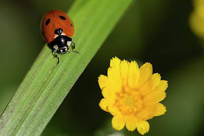 Ignacio Leal Royalty-Free and Rights-Managed Images - Ladybird by Ignacio Leal Orozco